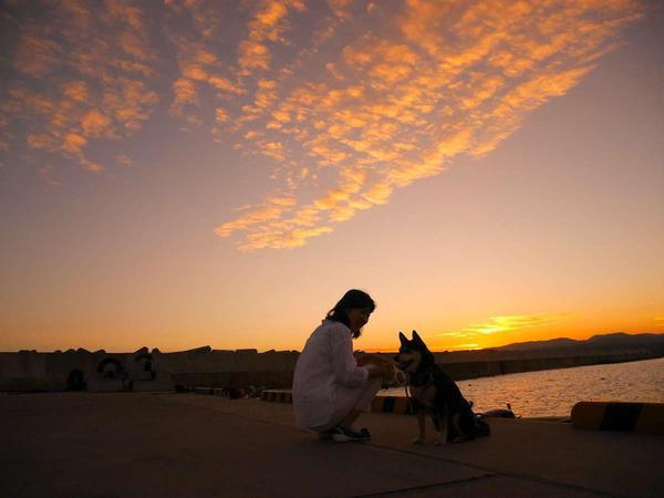 【お散歩コース】泊浜、夕陽を独り占めできる隠れた名所です。わんちゃんとの散歩にも最適です