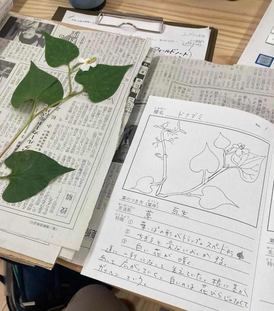 自分だけの植物図鑑を作ろう!